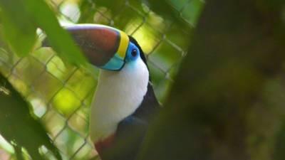 La Senda Verde: visita al refugio de fauna andina en Bolivia