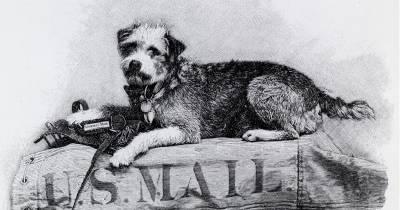 ¿Sabías que…? Owney el Perro Mascota del Servicio Postal de Estados Unidos