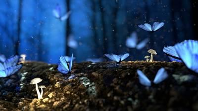 El jardín secreto de la poesía: Redundancia onírica