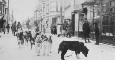 ¿Sabías que? La Carrera de la Misericordia: Perros Mensajeros que salvaron vidas