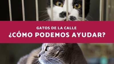 Gatos de la Calle ¿Cómo podemos ayudar?