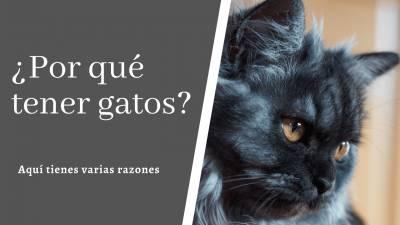 ¿Por qué tener gatos? Aquí tienes varias razones