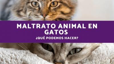 Maltrato animal en gatos - ¿Qué podemos hacer?