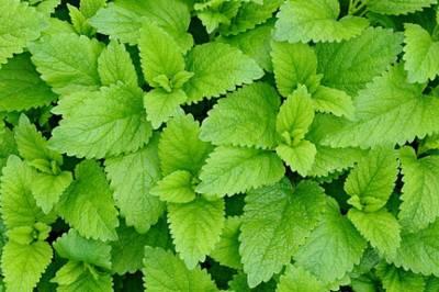 Pura magia verde - clorofila