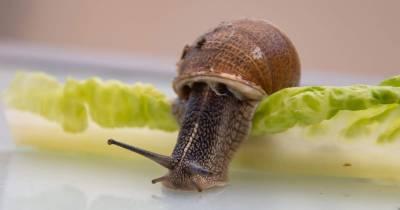 Miércoles Mudo: Estudiando el caracol