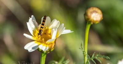 DOS MÁS EN LA FAMILIA: Miércoles Mudo: Naturaleza en primavera