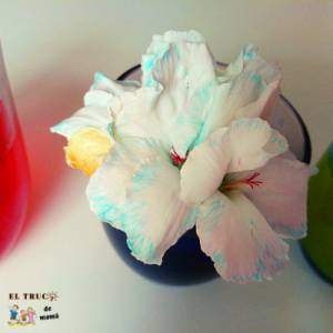 Actividades con semillas y flores para hacer con niños