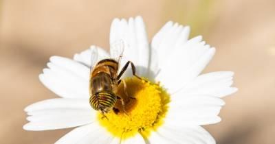 DOS MÁS EN LA FAMILIA: Miércoles Mudo: De insectos va la cosa