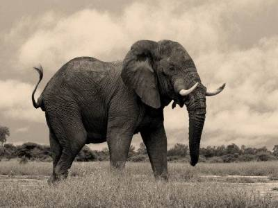 Cuento: el misterio del elefante