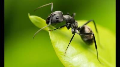 Lo que la Hormiga nos enseña al aplicar el Individualismo para autoprotegerse