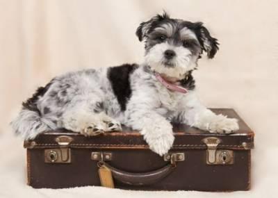 Qué hacer con nuestro perro en las vacaciones