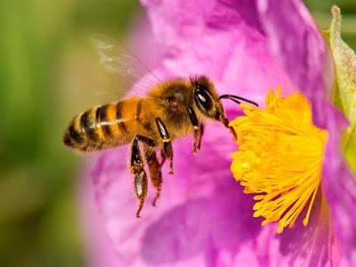 El plan B si nos quedamos sin abejas polinizadoras