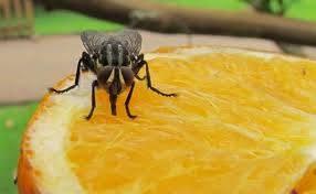 Muertes curiosas - La mosca