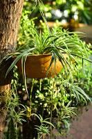 Jardinería y Salud Mental