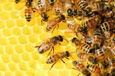 ¿Por qué las abejas crean sus colmenas en hexágonos?