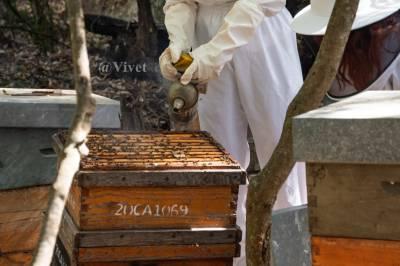 Rancho Cortesano. Museo de la Miel y las abejas. Plan con peques