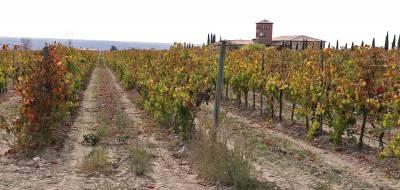 Imágenes de otoño en Las Rutas del Vino de Salamanca. Visita a viñedos de Arribes y La Sierra de Salamanca