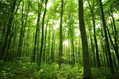 Baños de bosque, la terapia japonesa que cura el estrés