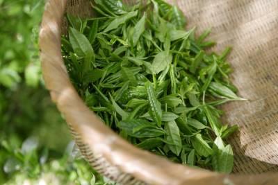 Los 5 beneficios del té verde para la piel » Blog de Moda y Belleza - ByAlejandrA. es
