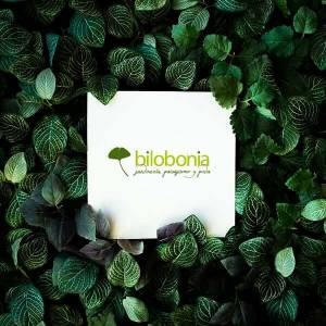 Diseñamos una estrategia con un plan de comunicación visual y verbal: Bilobonia