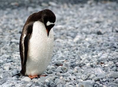 ¡Apadrina un pingüino! | Compromiso con el medio ambiente