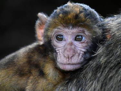 Conoce La Isla De Los Monos Borrachos