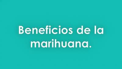 8 beneficios de la marihuana