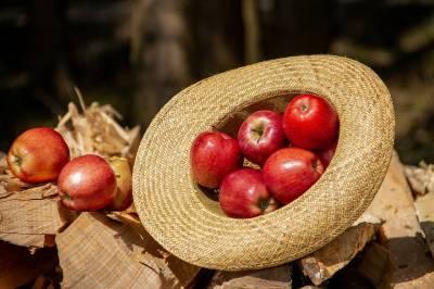 Los beneficios del vinagre de manzana »【ByAlejandrA 2021】
