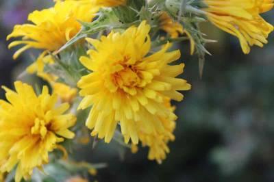 Flores como temática de mis fotografías - Antonio García Prats