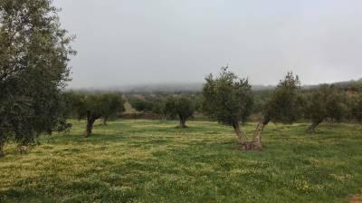 Aove: El Oro Líquido Andalusí | Oliva | Tesoros De España