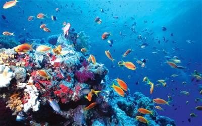 El planeta que debería llamarse océano