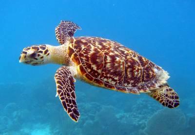 Costa rica, el paraíso de las tortugas marinas