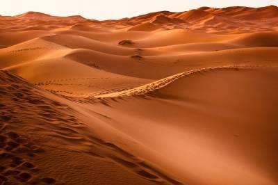 Curiosidades del desierto