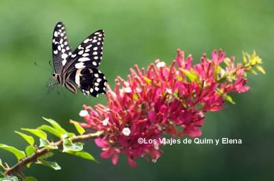 El vuelo de las mariposas, ¿quieres seguir viéndolas?