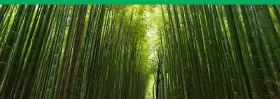Bambú   El Recurso Natural Sostenible que Usamos para Casi Todo