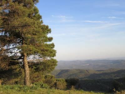 En lo alto de una colina